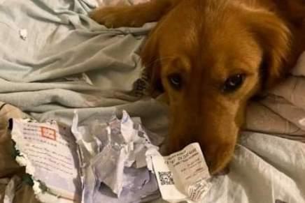 كلب ينقذ مالكته من خطركورونا